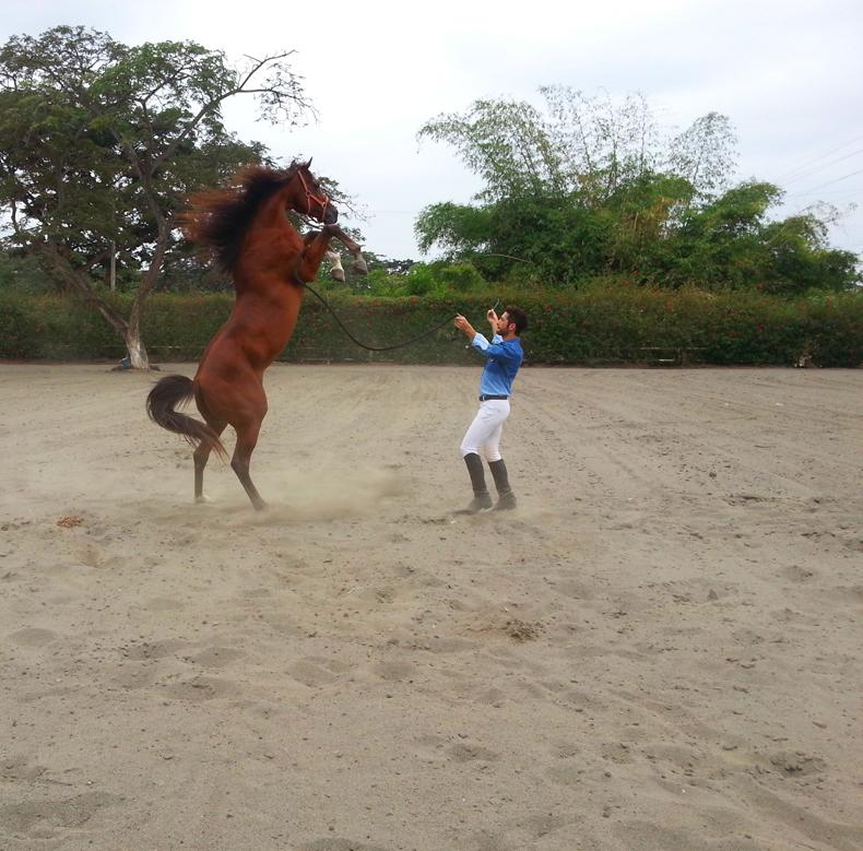 caballo 4 (1)